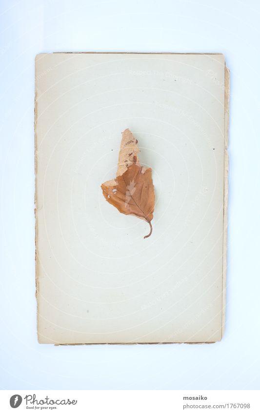Herbarium elegant Stil Design Erntedankfest Bildung Wissenschaften Schule Umwelt Natur Pflanze Herbst Blatt Papier einzigartig alt welk herbstlich Garten
