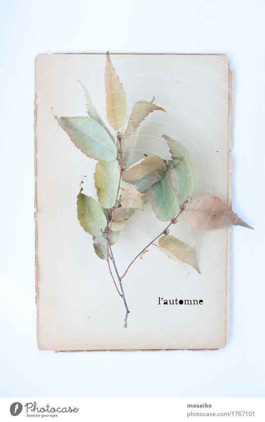Herbarium Lifestyle elegant Stil Design Feste & Feiern Erntedankfest Umwelt Natur Pflanze Blatt Papier Senior ästhetisch Herbst herbstlich poetisch Zweig