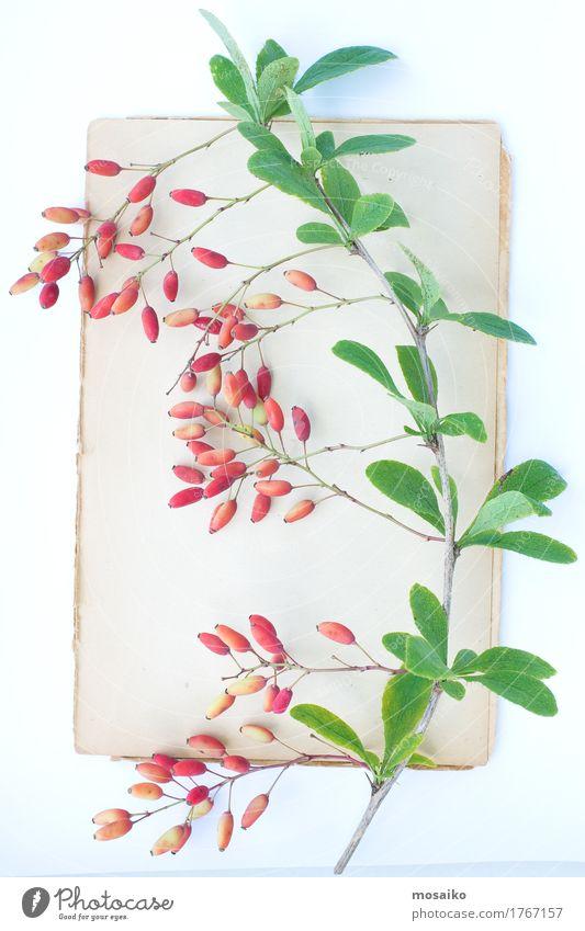 Herbarium Natur Pflanze Farbe rot Blatt Herbst Stil Garten Kunst Schule Stimmung Design Freizeit & Hobby elegant Buch Papier