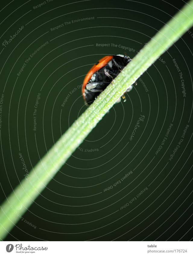 aufwärts . . . Natur grün rot Pflanze Tier schwarz Erholung Leben Wiese Glück Denken Arbeit & Erwerbstätigkeit Zufriedenheit Erfolg Pause Konzentration