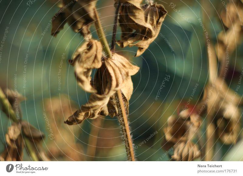 Lebensabend Natur alt Pflanze Blume Tier Blatt Einsamkeit Umwelt Tod Gefühle Traurigkeit Stimmung Zeit Kraft Klima