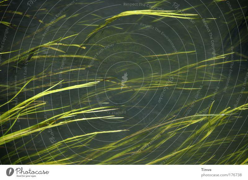 Alles im Fluß Farbfoto Außenaufnahme Nahaufnahme Tag Umwelt Wasser Sommer Pflanze Gras Grünpflanze Bach Fluss dunkel nass natürlich Geschwindigkeit Gewässer
