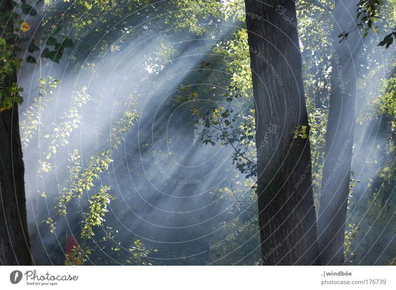 Waldnebel Farbfoto Außenaufnahme Menschenleer Morgen Morgendämmerung Licht Lichterscheinung Sonnenlicht Sonnenstrahlen Zentralperspektive Totale Blick nach vorn