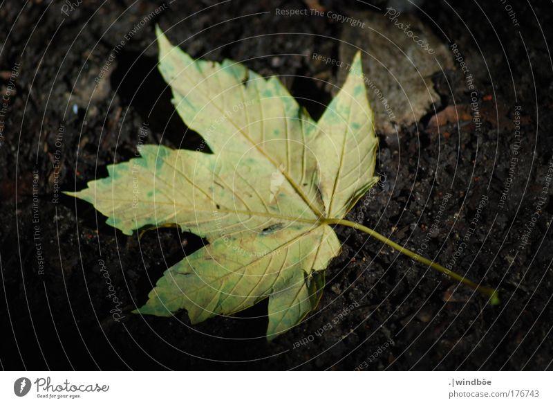 Dunkel gelegen Natur alt grün Baum Pflanze Sonne Sommer Blatt schwarz gelb dunkel Herbst braun gold liegen außergewöhnlich