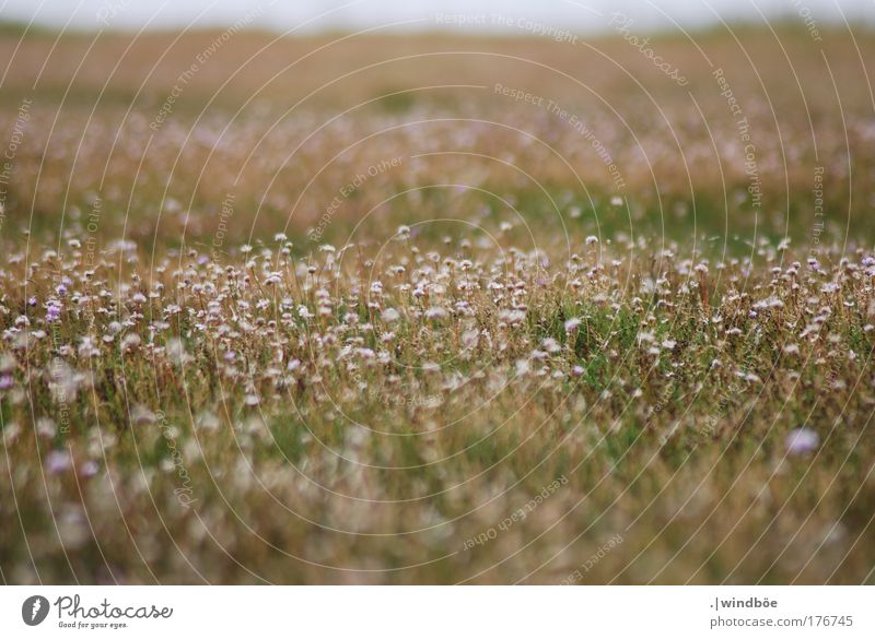 Wildblumenwiese Farbfoto Außenaufnahme Nahaufnahme Menschenleer Tag Sonnenlicht Unschärfe Zentralperspektive Totale Blick nach vorn Umwelt Natur Landschaft Erde