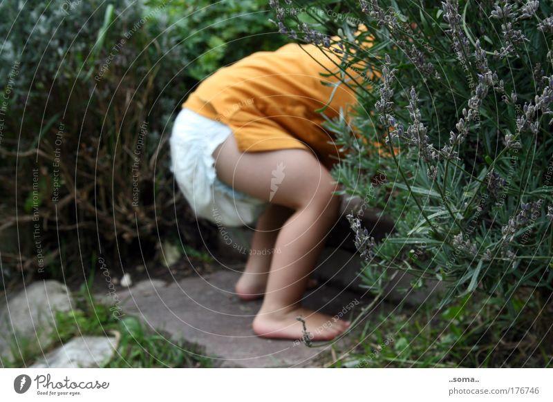 Duftes Versteck Farbfoto Außenaufnahme Tag Kinderspiel Baby Kleinkind Kindheit Haut Gesäß Beine Fuß 1 Mensch 1-3 Jahre Sommer Pflanze Gras Sträucher Garten