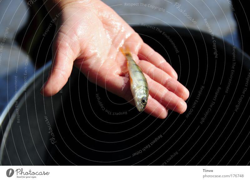See-Fisch Farbfoto Außenaufnahme Nahaufnahme Textfreiraum unten Tag Abend Schatten Kontrast Hand Finger Schuppen 1 Tier fangen festhalten warten nass