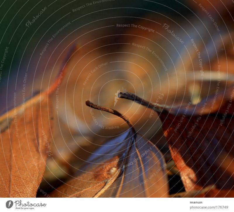 Gefallen Natur alt Blatt ruhig Wiese Herbst Traurigkeit Park braun natürlich Wandel & Veränderung Vergänglichkeit trocken Herbstlaub herbstlich Herbstfärbung