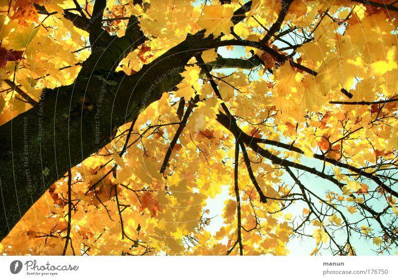 Bald! Natur schön Baum Sonne ruhig Blatt gelb Wald Erholung Herbst Park hell Design gold Wandel & Veränderung Vergänglichkeit