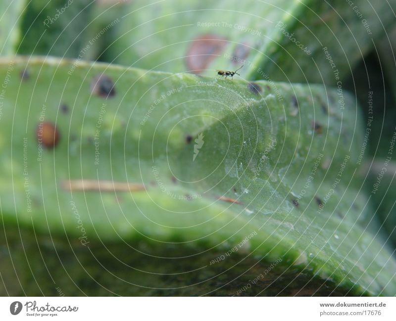 Ameisenarbeiter grün Blatt