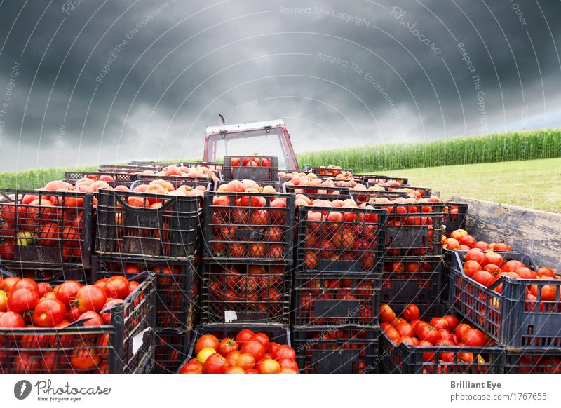 Los geht's Lebensmittel Gemüse Tomate Ernährung Arbeit & Erwerbstätigkeit Landwirtschaft Forstwirtschaft Güterverkehr & Logistik Traktor Feld Bewegung saftig