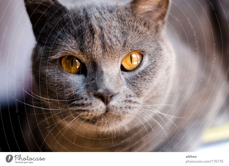 Farbfoto Detailaufnahme Morgen Tag Tierporträt Blick Haustier Katze 1 Schreibwaren
