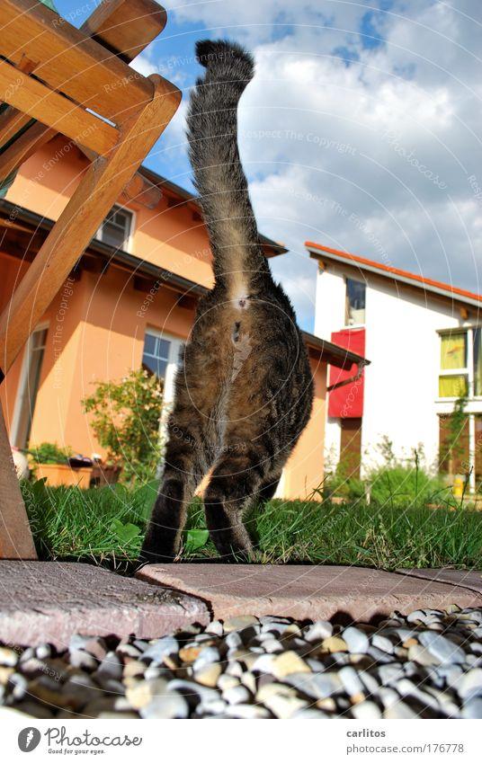 lebensnahe, ehrliche Fotografie Katze laufen Gesäß Fell Haustier Momentaufnahme Schwanz verfolgen Skandal Paparazzo geblitzt Stalking belästigen