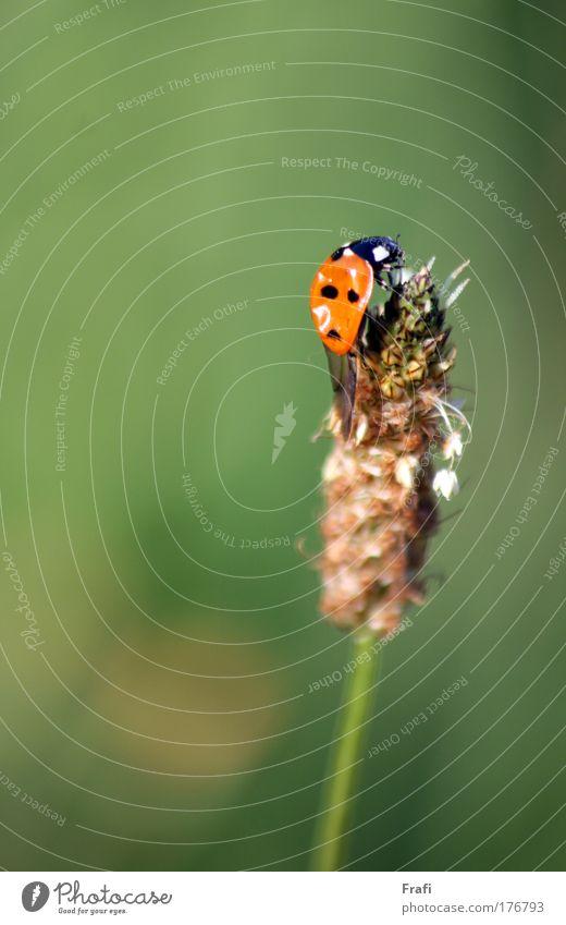 Klappt der Absprung? mehrfarbig Außenaufnahme Tag Sonnenlicht Unschärfe Zentralperspektive Tierporträt Blick Natur Pflanze Sommer Schönes Wetter Gras Sträucher