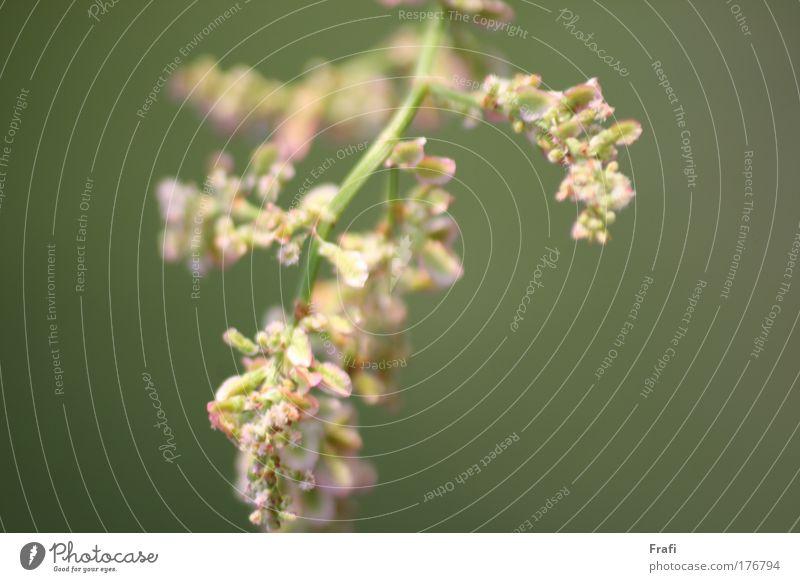Wiesenspaziergang Natur schön Pflanze Wiese Umwelt Landschaft Blüte Feld wild Klima Grünpflanze Wildpflanze