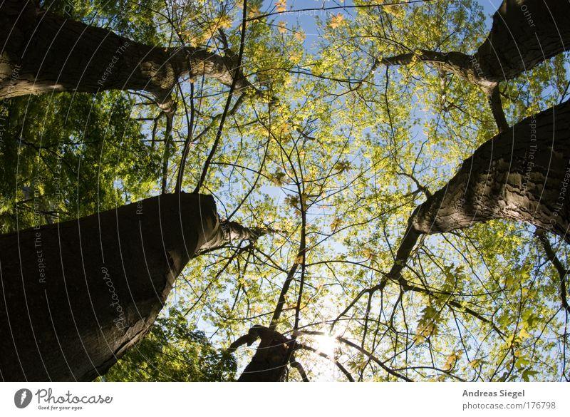 Träumerei Farbfoto Außenaufnahme Menschenleer Sonnenlicht Fischauge Blick nach oben Freude Glück harmonisch Wohlgefühl Zufriedenheit Sinnesorgane Erholung ruhig