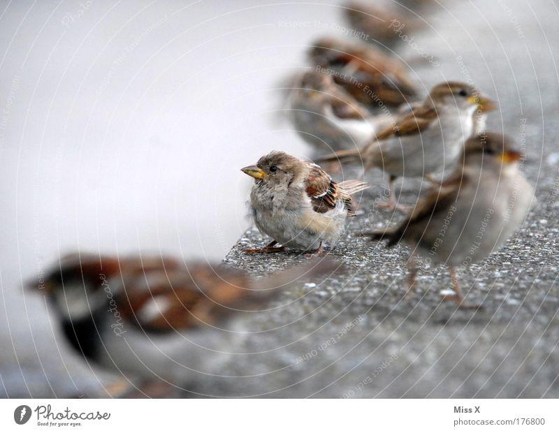 Einsam unter vielen Natur schön Tier Einsamkeit Wand klein Mauer Freundschaft Vogel Park Tiergruppe Flügel Sicherheit Warmherzigkeit Schutz