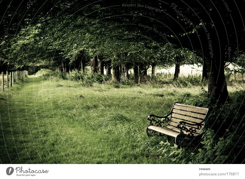 entspannen Natur alt grün Baum Erholung Landschaft ruhig Wiese Gras Wege & Pfade Glück Park Zufriedenheit Feld Idylle Fußweg