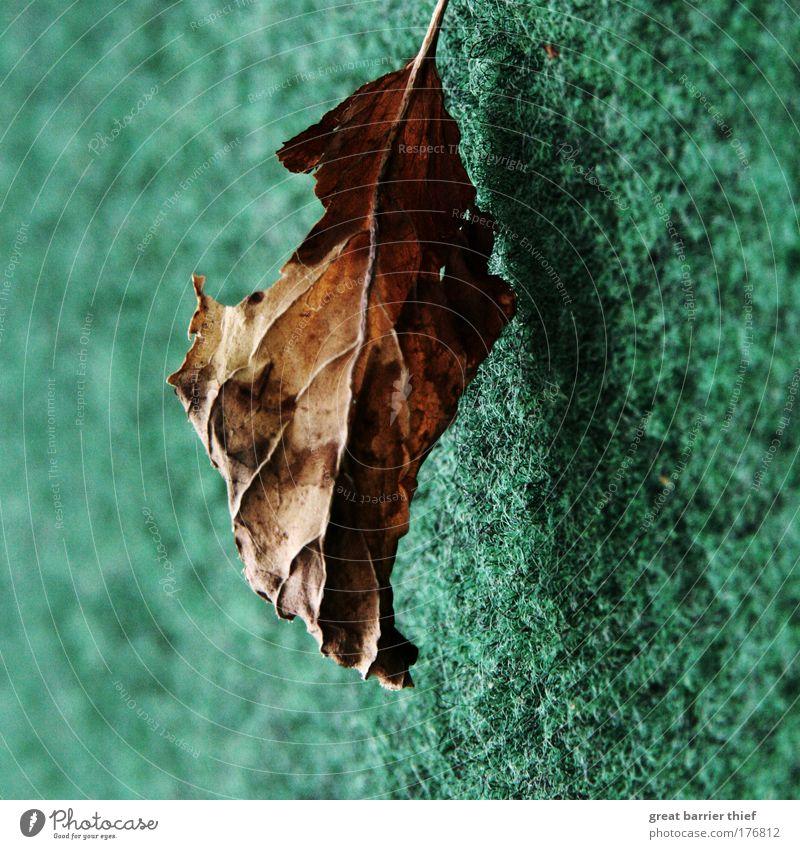 schwebende demenz Natur grün Sommer ruhig Blatt Erholung Holz Wärme Stimmung braun warten fliegen Hoffnung ästhetisch fallen verfallen