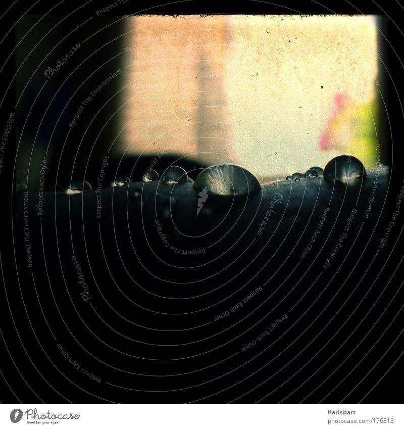 tränen. agave. Natur Wasser schön Pflanze Ferien & Urlaub & Reisen Sommer Farbe Erholung dunkel Regen Wohnung Design Wassertropfen ästhetisch Häusliches Leben