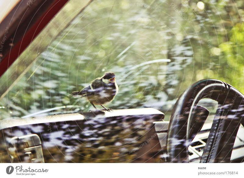 Vogelperspektive Natur Tier Umwelt Autofenster klein Vogel Angst PKW Verkehr sitzen Wildtier warten niedlich Fahrzeug schreien gefangen