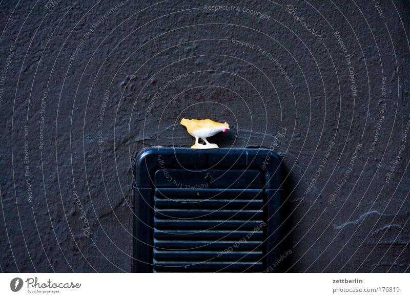 Huhn Haushuhn Vogel Spielzeug Gackern packen Gegensprechanlage Kommunizieren sprechen Telekommunikation Kontakt Wand Ecke Nische Tür Eingang picken