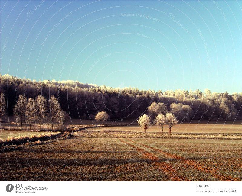 Väterchen Frost Farbfoto Außenaufnahme Menschenleer Morgen Morgendämmerung Schatten Panorama (Aussicht) Umwelt Natur Landschaft Erde Wolkenloser Himmel Winter