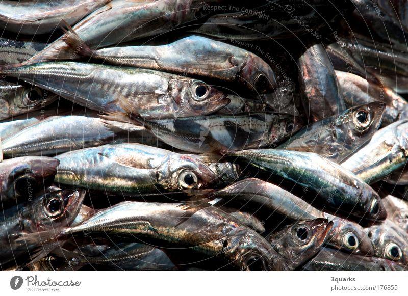 fischmarkt blau grün Meer Tier Freizeit & Hobby glänzend Lebensmittel frisch Ernährung ästhetisch Fisch genießen Gastronomie lecker Angeln