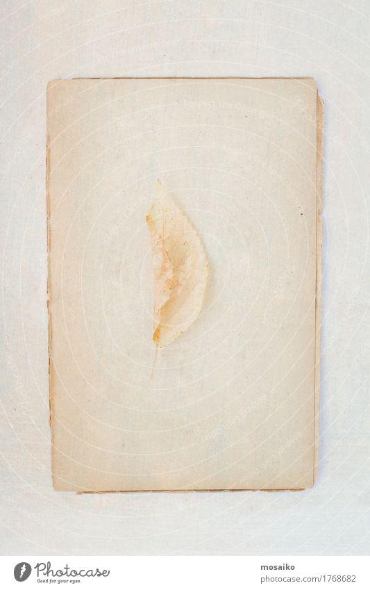 Herbarium Natur alt Pflanze Blatt ruhig Umwelt gelb Kunst Zeit Stimmung Design Zufriedenheit gold elegant Kraft retro