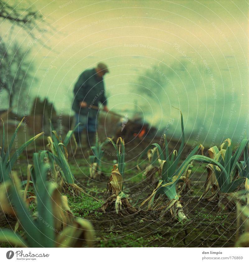 landarbeit 2 Mensch Mann grün Senior Garten Arbeit & Erwerbstätigkeit Feld maskulin Gemüse analog Ruhestand Bioprodukte 60 und älter Gartenarbeit Erfahrung Männlicher Senior