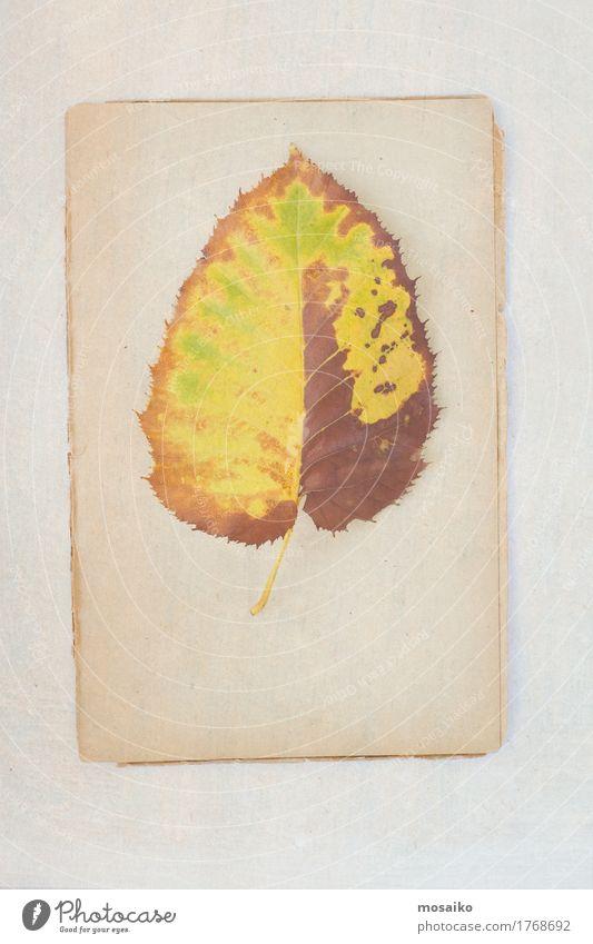 Herbarium Natur Pflanze Baum Blatt Winter Umwelt Herbst Stil Kunst Design träumen Zufriedenheit elegant ästhetisch retro Kreativität