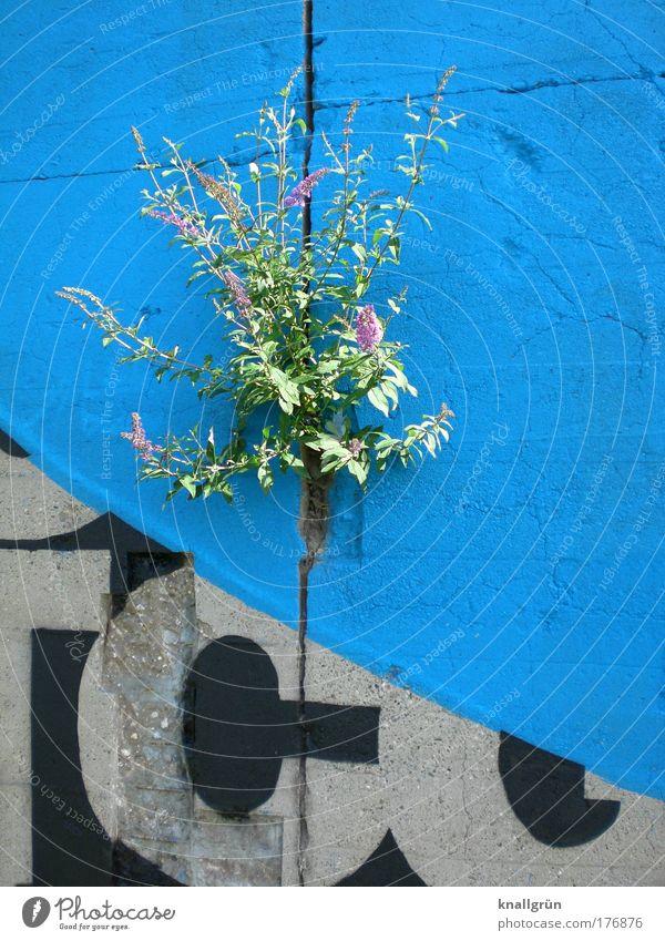 Urban jungle Natur blau grün Pflanze schwarz Leben Wand Umwelt Graffiti grau Stein Mauer Beton Schriftzeichen Hoffnung Sträucher