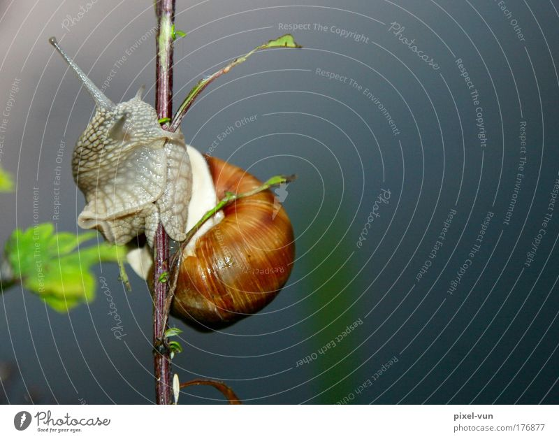 Molluske auf Hühnerbeinchen Farbfoto Außenaufnahme Nahaufnahme Menschenleer Textfreiraum rechts Hintergrund neutral Silhouette Starke Tiefenschärfe