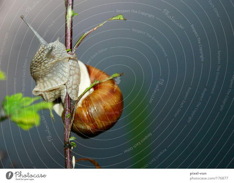 Molluske auf Hühnerbeinchen Freude Tier Bewegung Zufriedenheit außergewöhnlich Wildtier elegant Fröhlichkeit weich berühren festhalten Klettern Freundlichkeit