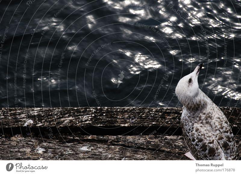 Möwe Natur Wasser Meer Tier grau Vogel Wellen Küste Flügel Hafen Neugier Wildtier Bucht Seeufer Ostsee Schönes Wetter