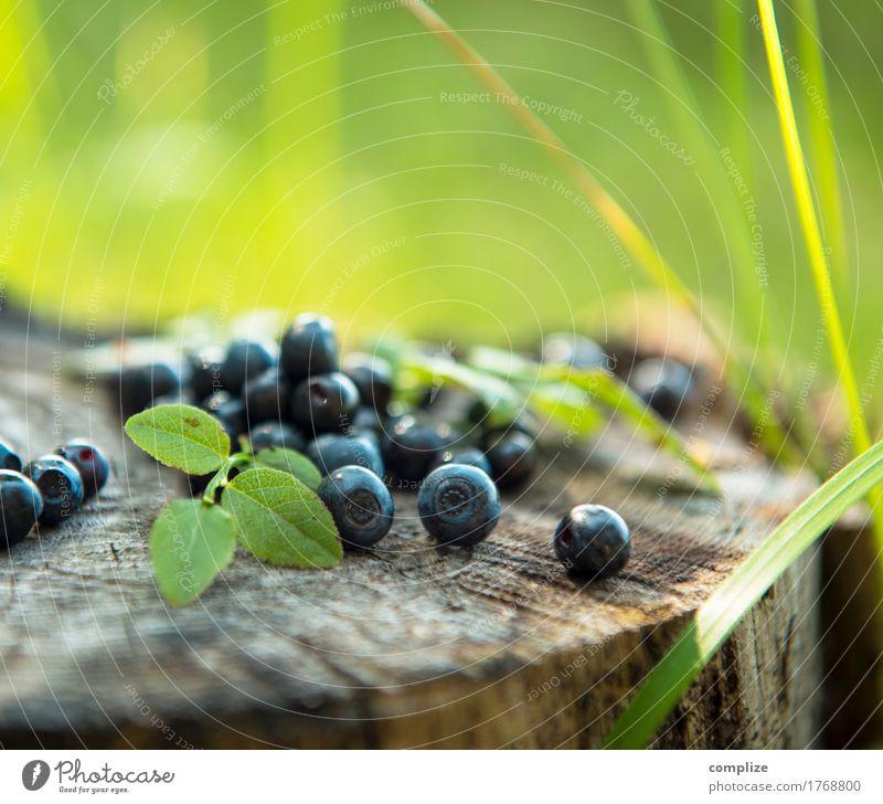 Heidelbeeren Pflanze blau Sommer Gesunde Ernährung Baum Freude Essen Gras Gesundheit Lebensmittel Frucht wandern Sträucher lecker Bioprodukte