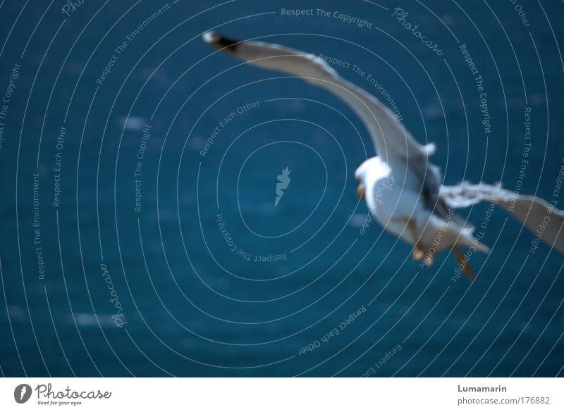 Sturzflug Wasser blau weiß Meer Sommer Tier Ferne Leben Freiheit Landschaft oben Luft träumen Stimmung Vogel Wind