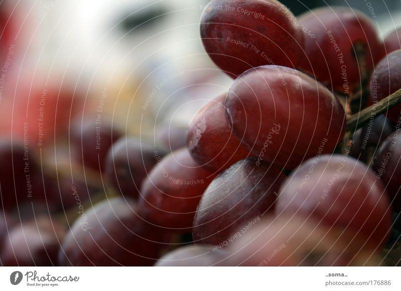 Weintrauben Farbfoto Außenaufnahme Lebensmittel Frucht Trauben Ernährung Vegetarische Ernährung Fingerfood Gesundheit füttern genießen frisch gut natürlich