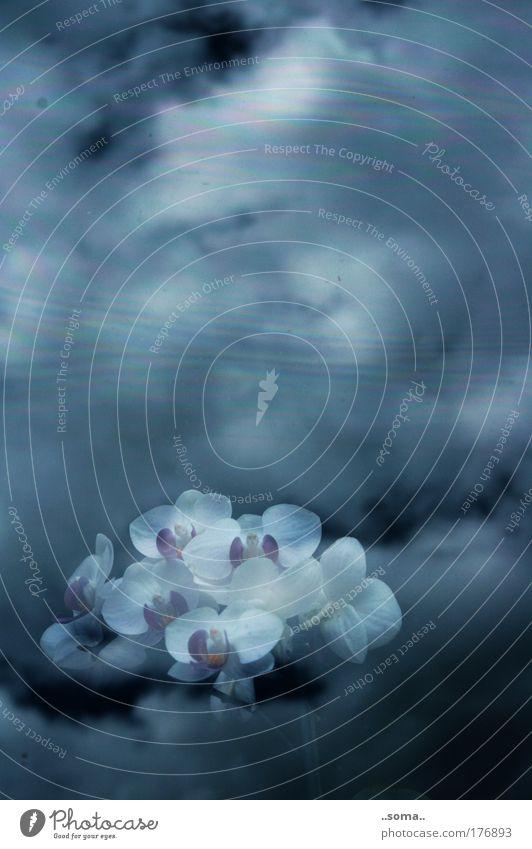 Orch-idee schön Himmel Blume Pflanze ruhig Wolken Ferne Gefühle Fenster träumen Traurigkeit Stimmung Wohnung nah Frieden Kitsch