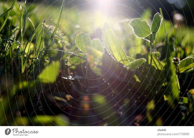 sonnenuntergangswiese Natur Sonne Blume Sommer ruhig Wiese Gras Park Denken Sträucher liegen Blühend Duft Schönes Wetter Sonnenaufgang