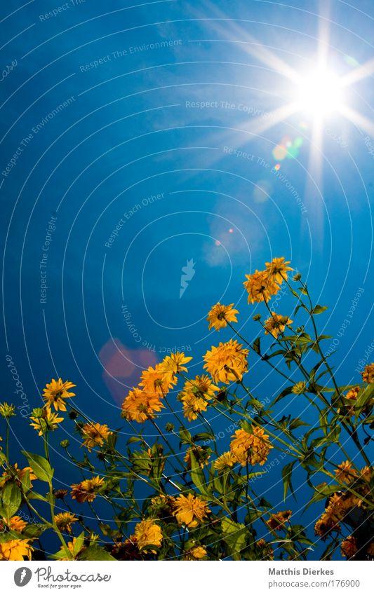 Ringelblumen Natur schön Blume Pflanze Sommer Blumenwiese Wiese Beleuchtung Insekt einzigartig Idylle Feld unten leuchten Strahlung Biologie