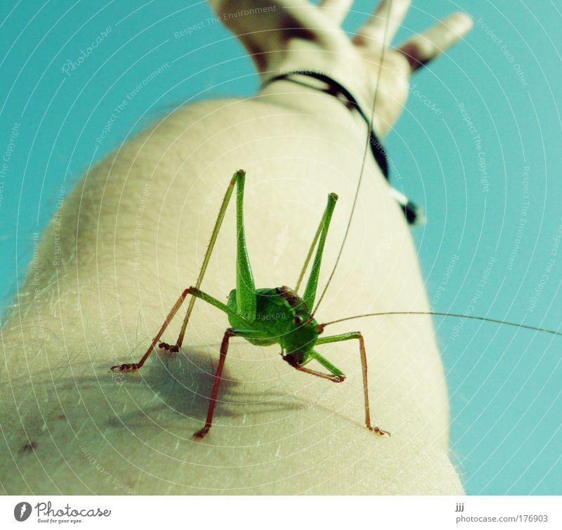verhüpft Makroaufnahme Haut Arme Hand Heuschrecke Steppengrashüpfer Insekt Überraschung Konkurrenz Mobilität Perspektive begegnen Hedgefond Feindliche Übernahme