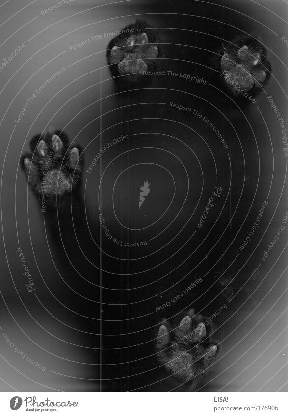 scan II weiß schwarz Tier grau Schwarzweißfoto Katze stehen Haustier