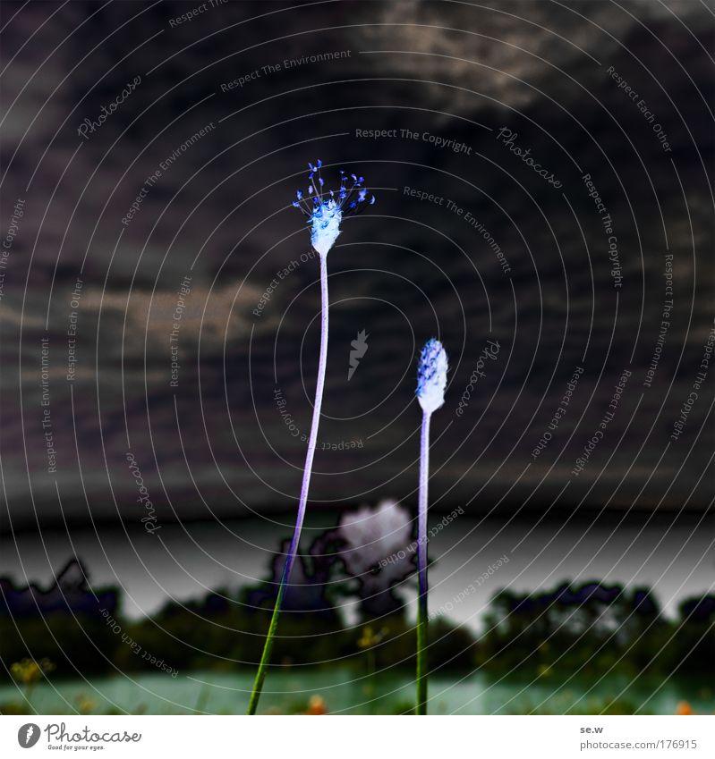 Rein pflanzlich! Natur weiß blau Pflanze schwarz Wolken Gefühle Traurigkeit Luft Stimmung Kraft Kunst verrückt Hoffnung bedrohlich außergewöhnlich
