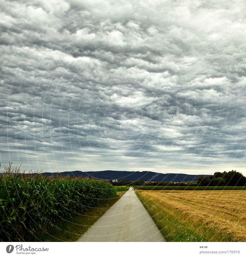 Zwei Welten Natur Himmel grün Sommer ruhig Einsamkeit gelb grau Traurigkeit Landschaft Luft Stimmung Feld Umwelt ästhetisch authentisch