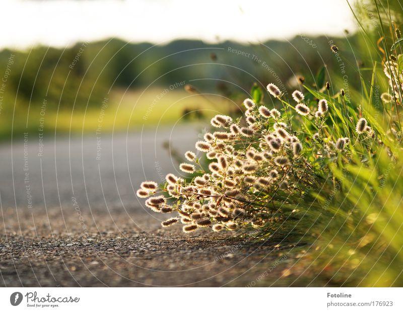 98 ... Gräser :-) ... Farbfoto mehrfarbig Außenaufnahme Menschenleer Morgen Tag Sonnenlicht Umwelt Natur Landschaft Pflanze Erde Himmel Sommer Gras Wildpflanze