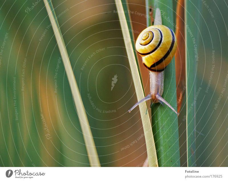 ...99... cm Weg ... :-) Natur Pflanze Tier Wiese Gras Park hell Feld klein Umwelt Wildtier Schnecke Fühler krabbeln schleimig Schneckenhaus