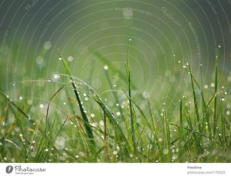 100 ... Tautropfen am Morgen Farbfoto Außenaufnahme Menschenleer Tag Umwelt Natur Landschaft Pflanze Frühling Sommer Gras Park Wiese hell nass grün Tropfen