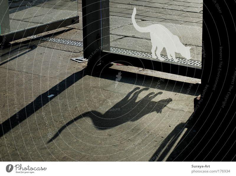 Catwalk Farbfoto Außenaufnahme Tag Schatten Gegenlicht Gebäude Tür Katze Glas Zeichen entdecken gehen Jagd ästhetisch listig grau schwarz weiß Wachsamkeit Leben