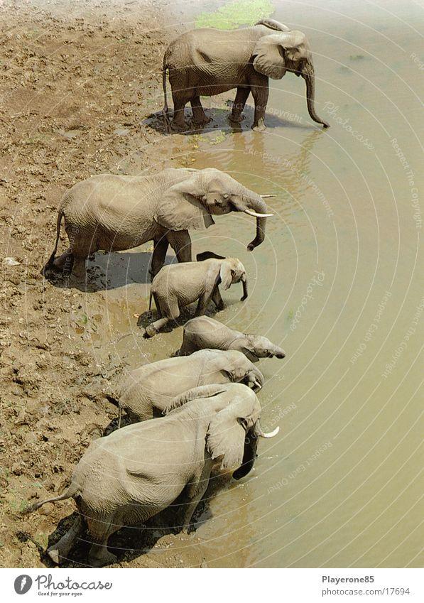 Elefanten Wasser Afrika Elefant